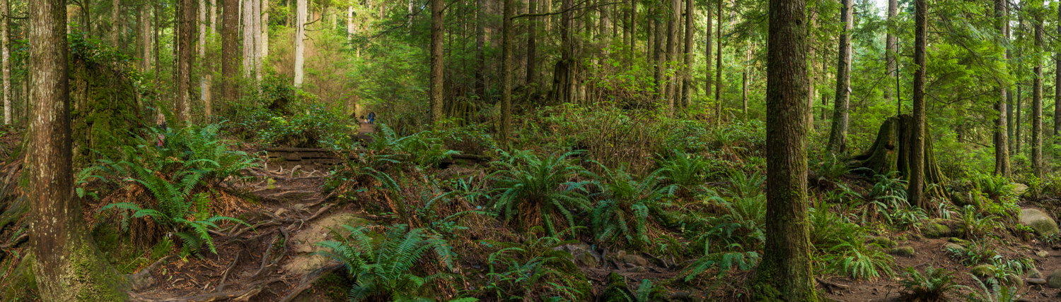 Forest Scene in Lynn Canyon Park