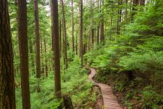 Baden Powell Trail Boardwalk