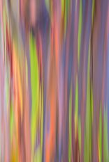 Rainbow Eucalyptus Tree Abstract