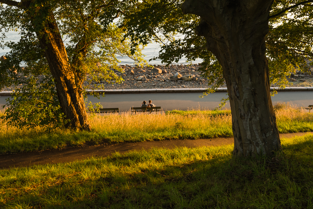 stanley park bench