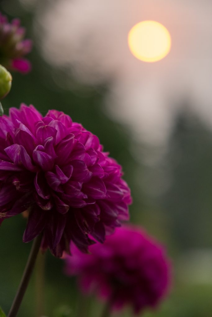 Floral Sunlight
