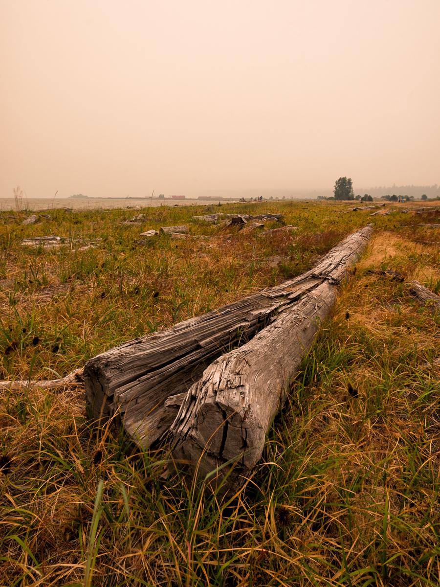 Driftwood on Iona Beach