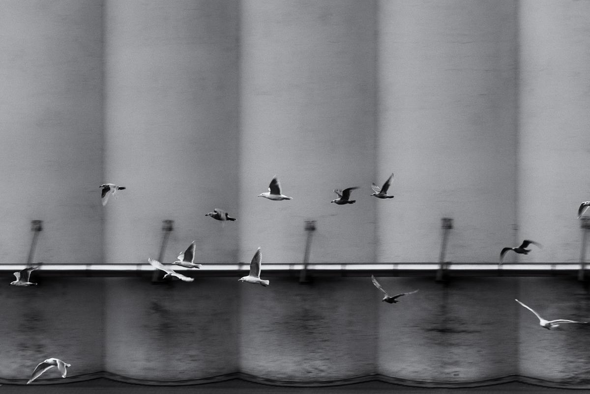 Seagulls Grain Silo Vancouver