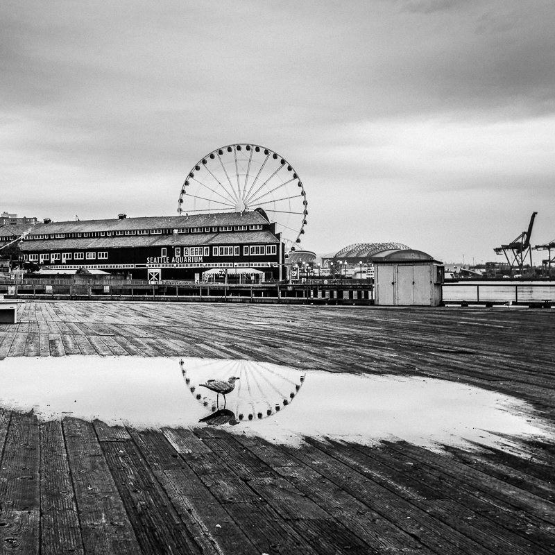 Seattle Reflections - Seagull on the Pier